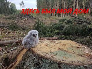 СОВПАДАЮТ ЛИ ИНТЕРЕСЫ КОРПОРАЦИЙ И МЕСТНЫХ ЖИТЕЛЕЙ ?  МОЭСК собирается срубить более 2000 деревьев,