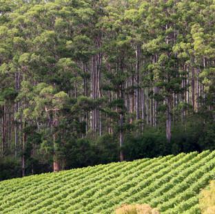 10 Chains Vineyard