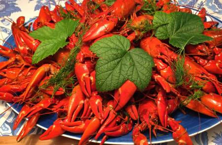 Large-Plate-Red-Crayfish.jpg