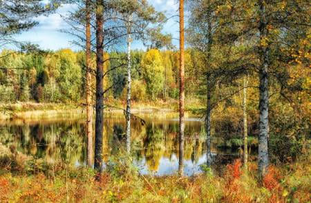 Water-Trees-Autumn-Finland.jpg