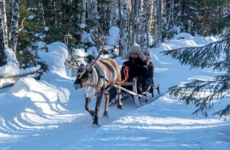 Reindeer-Sled-Ride-Lapland-Finland.jpg