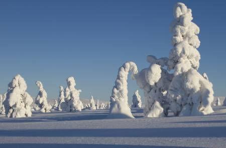 Snow-Lapland-Finland.jpg