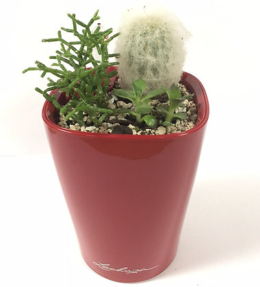 Cactus & succulents in Mini Deltini, red
