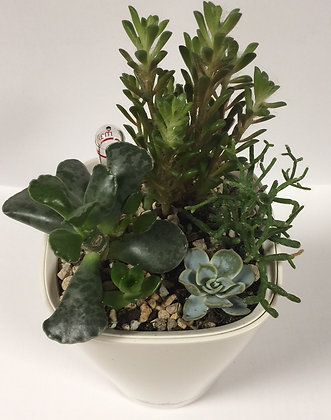 Cactus & succulents in Mini Deltini, white