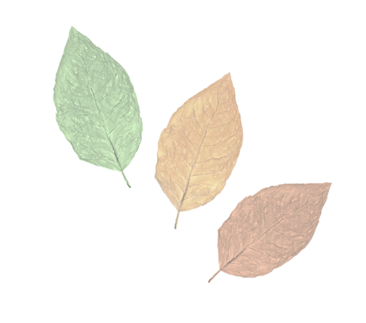 Leaves for Web.png