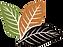 TT Color Logo Vector.png
