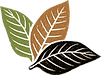 TT Color Logo Vector_edited.png