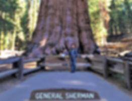 全世界最大的雪曼將軍樹.jpg