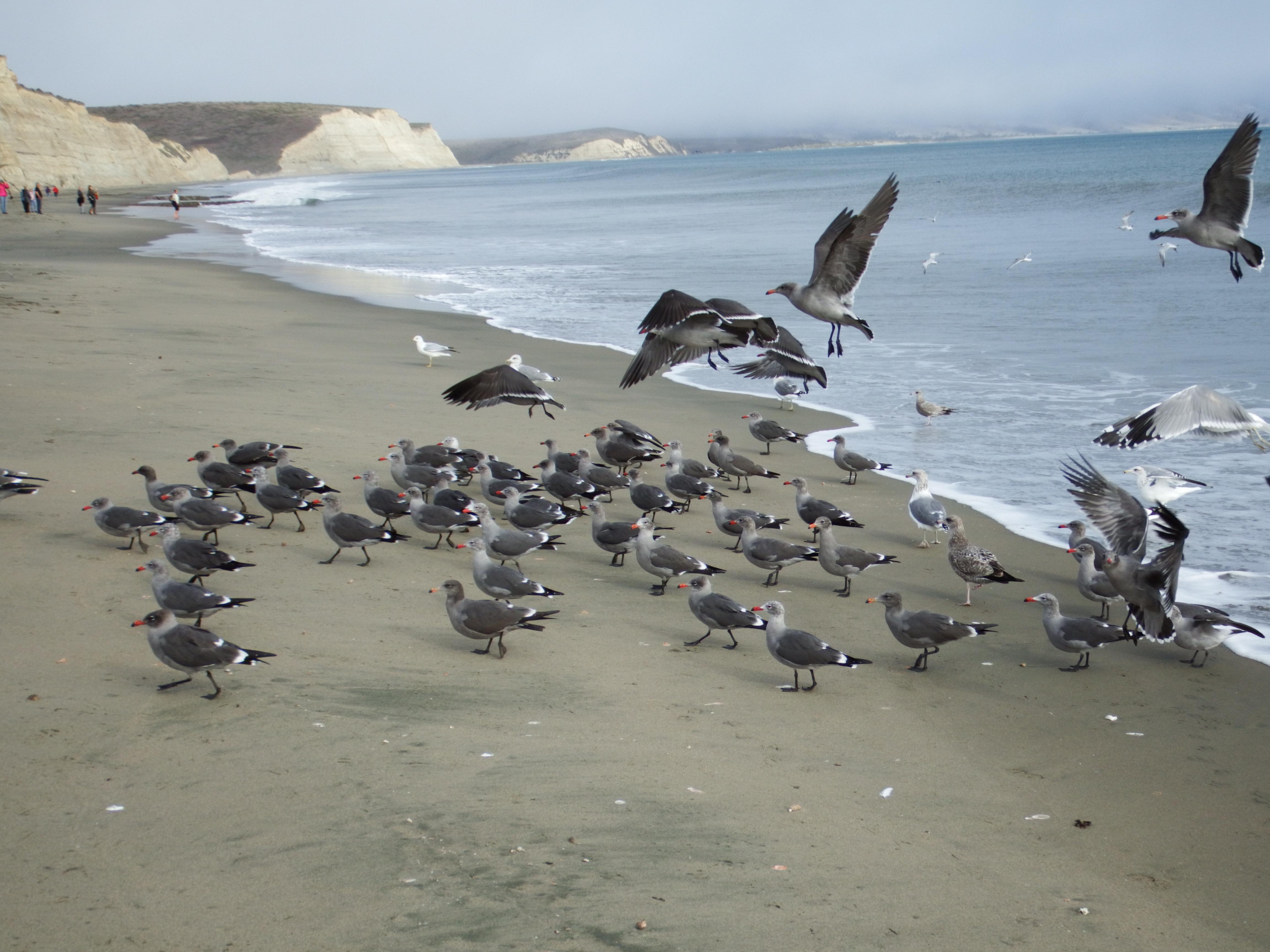 雷斯岬德雷克海灘的海鳥