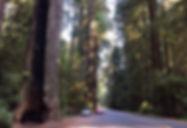 紅木高速公路1.jpg