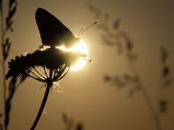 papillon en fusion