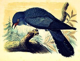 Pierre-Josquin ; Goisbault ; folk-songs ; extraits ; The Cuckoo ; Steve Waring