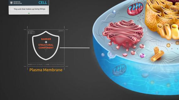 Basis of Cellular and Molecular Biology