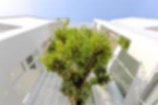 D8_Tree.JPG