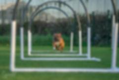 Hoopers, hondensport, hondenschool Alkmaar