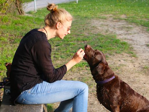 Met wat voor voer beloon jij je hond?