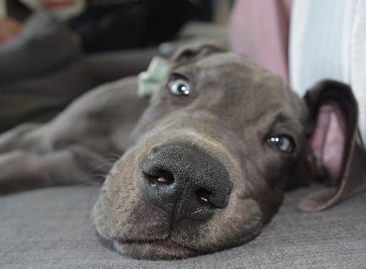 Is mijn pup al een puber?