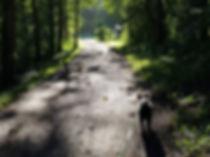 hondenschool alkmaar, hondentraining heemskerk, hondengedrag, hondenopvoeding, hondencursus, gehoorzaamheidstraining, Puppytraining, hondentrainer, hond opvoeden