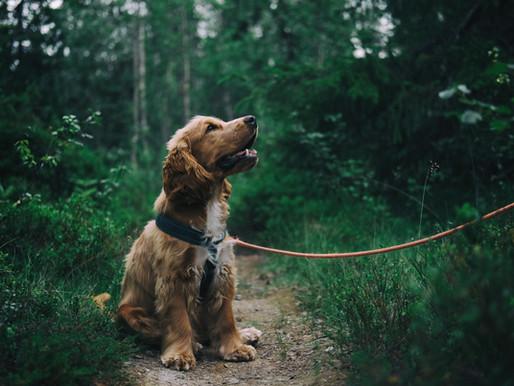 Hoe maak ik mijn hond zindelijk?
