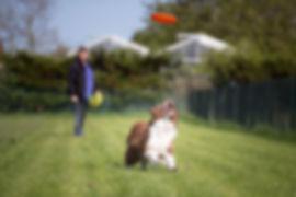 Frisbee, hond