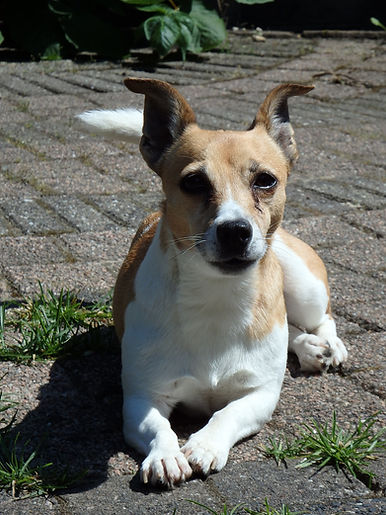 adoptie hond