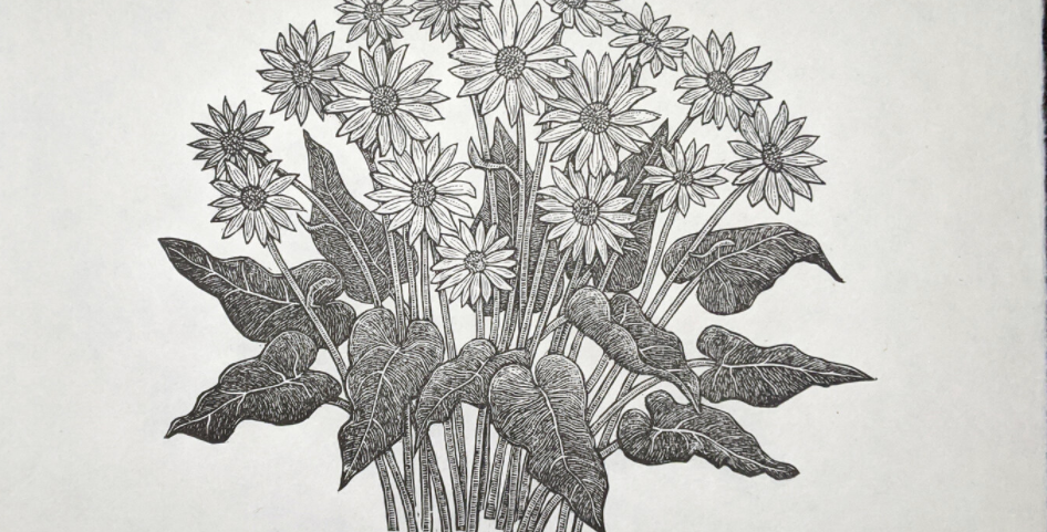Arrowleaf Balsamroot Print : Anomal Press