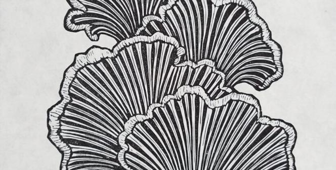 Split Gill Fungus Print : Anomal Press