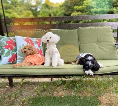 小型犬は3匹、中型犬は2匹、大型犬は1匹まで