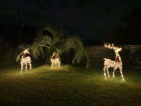 クリスマスシーズンのトナカイたち