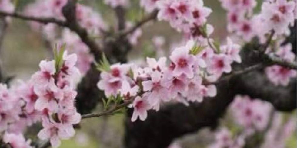 Nanhui Peach Blossom Bike Ride