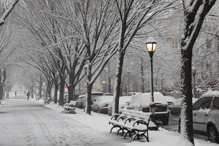 Snow in Crown Heights.