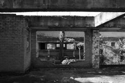 Derelict Housing Site