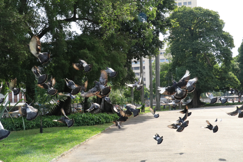 Parque de Lage | Rio de Janeiro