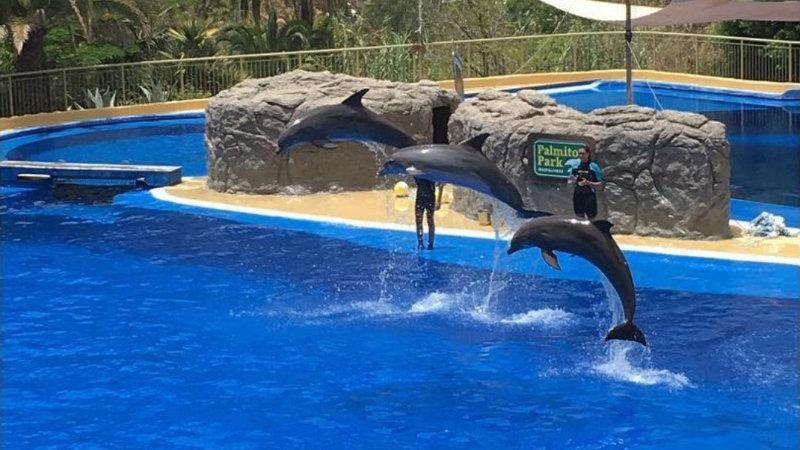 Шоу дельфинов 50 мин
