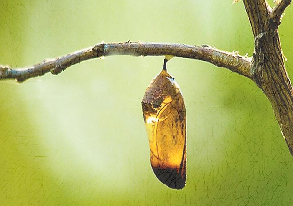 cocoon-2 cópia.png