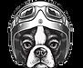lofo%20funsy%20bulldog_edited.png