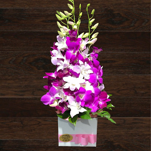 Mini Orchid Box (colours may vary)