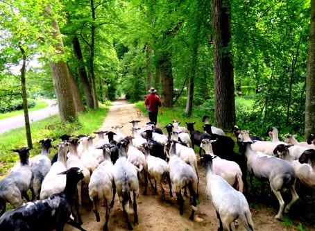 Een ode aan de wol