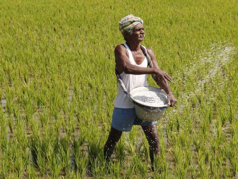 DOUBLING OF FARMERS INCOME BY 2022