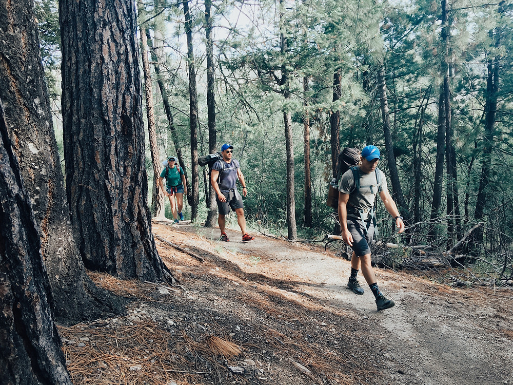 Three hikers in the woods on Mt Lemmon