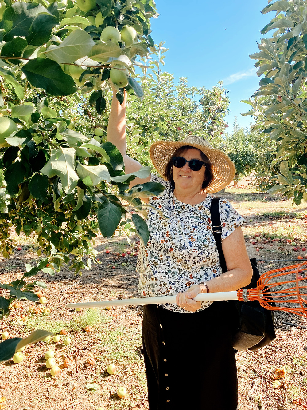 Picking apples at Apple Annie's Orchard in Willcox, Arizona