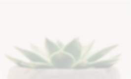 Cactus_edited.png