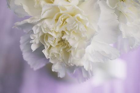 In Lieu of Flowers BG.jpg