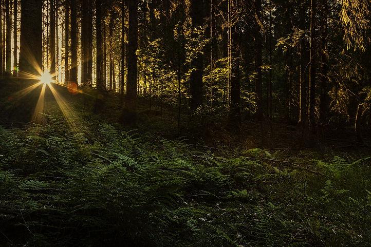 Forest Floor BG.jpg