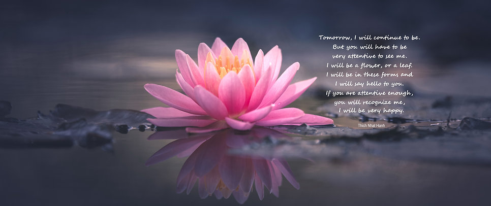 Lotus in mud Continuation Quote.jpg