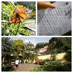 Instagram - Hoje fizemos um jogo no Jardim de Plantas Aromáticas! Cheiroso 😌