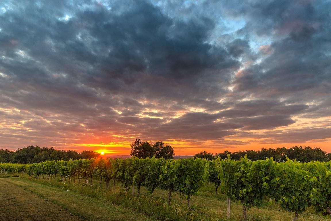 Saint-Nexans, un village de vignes et de