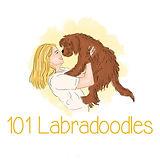 Labradoodle-101Labradoodles-Dogbreedar.j