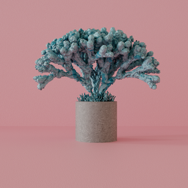 02_Coral_B_v01_low.png