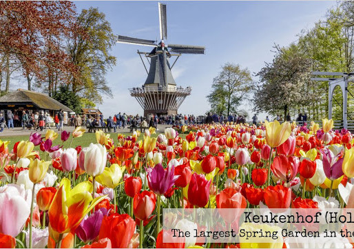 Keukenhof Gardens – A Perfect Day Trip in Amsterdam
